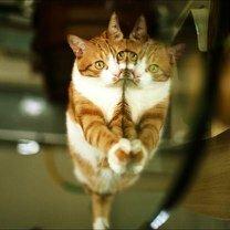Фото приколы Фотоприколы с животными (25 фото)