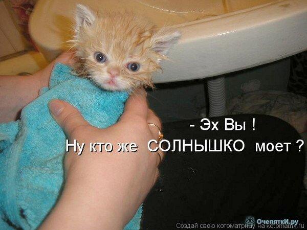 Весёлая котоматрица 2