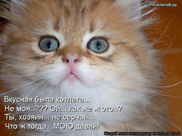 Весёлая котоматрица 13
