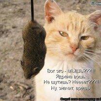 Весёлая котоматрица смешных фото приколов