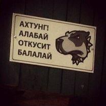 Осторожно, злая собачонка! фото приколы