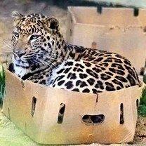 Фото приколы Кошки есть кошки (24 фото)
