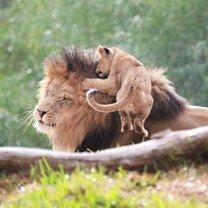 Фото приколы Симпатичные любимцы-зверушки (40 фото)