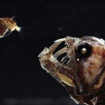 Фото приколы Страшные обитатели океанских глубин (25 фото)
