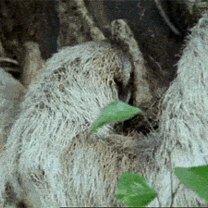 Фото приколы Гиф-приколизмы для настроения (29 фото)