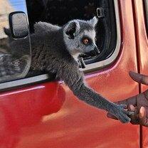Фото приколы Трогательность и забавность животных (25 фото)