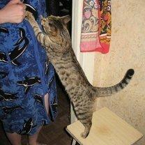 Котособакоматрица
