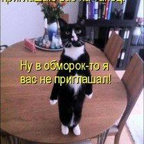 Фото приколы Приколы в котоматрице (38 фото)