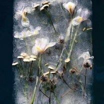 Фото приколы Цветы во льду (15 фото)