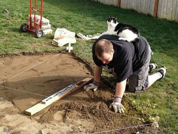 Приставучие кошки 6