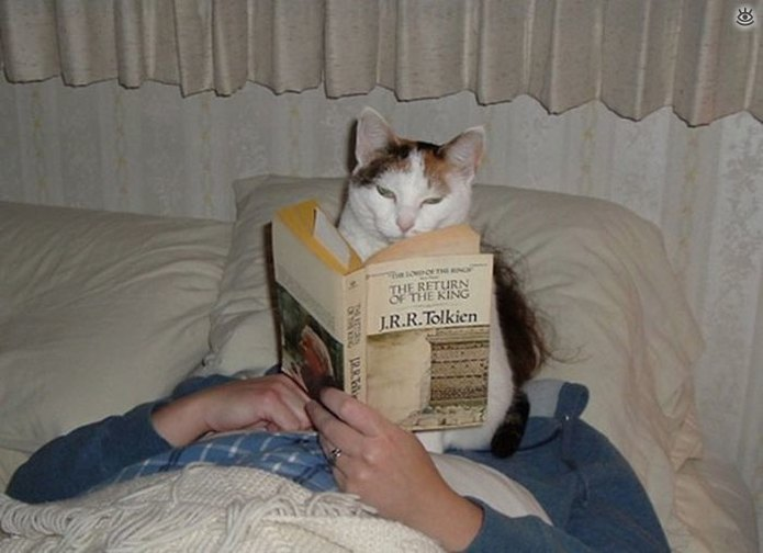 Приставучие кошки 9
