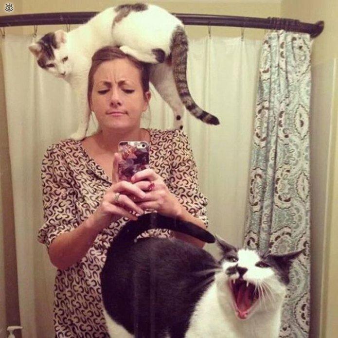 Приставучие кошки 10