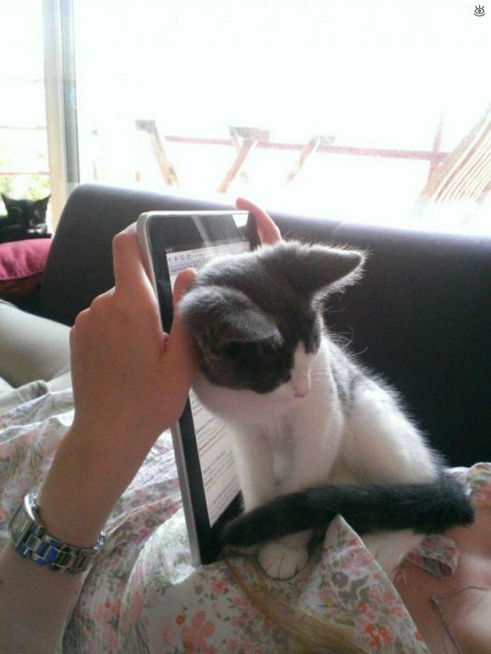 Приставучие кошки 12