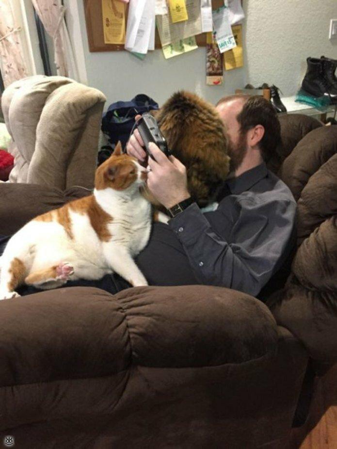 Приставучие кошки 13