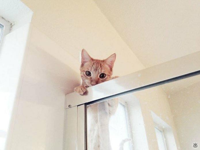 Приставучие кошки 16