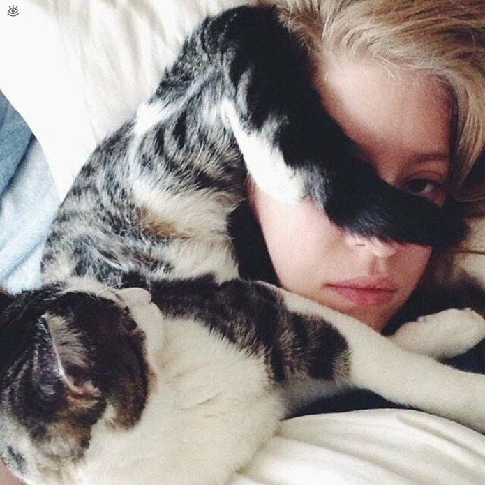 Приставучие кошки 17