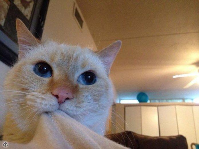 Приставучие кошки 24