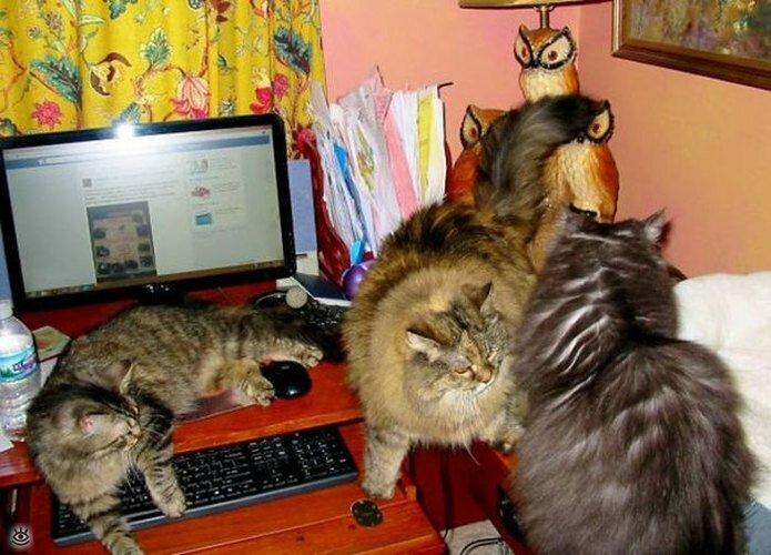 Приставучие кошки 28