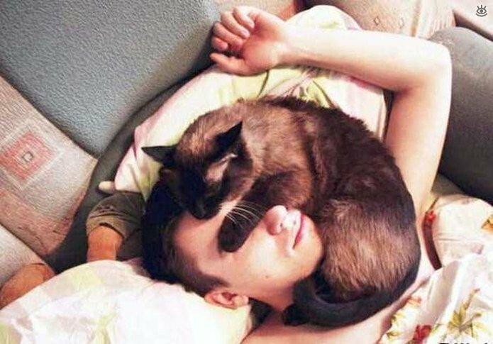 Приставучие кошки 32