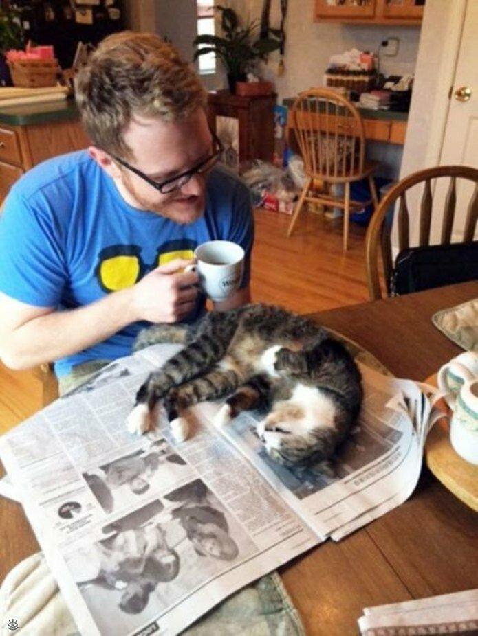 Приставучие кошки 39