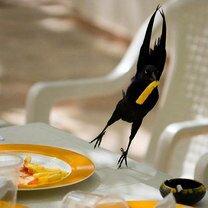 Фото приколы Симпатяги-зверушки (25 фото)