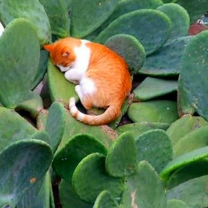 Когда кошки смертельно устают смешных фото приколов