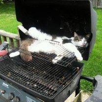 Фото приколы Когда кошки смертельно устают (23 фото)