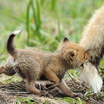 Симпатичные и чудные зверьки смешных фото приколов