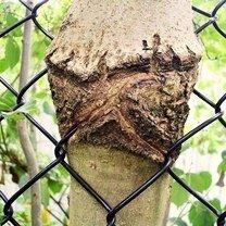 Природа везде прорвётся