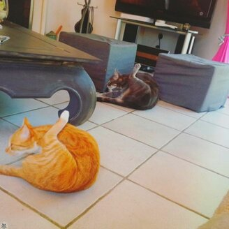 Синхронные кошки смешных фото приколов