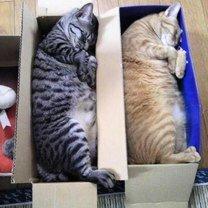 Фото приколы Синхронные кошки (34 фото)