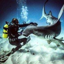 Фото с акулами