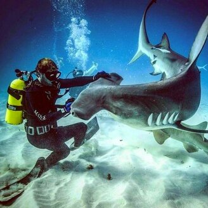 Фото с акулами смешных фото приколов