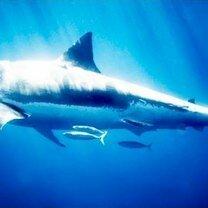 Фото приколы Фото с акулами (15 фото)
