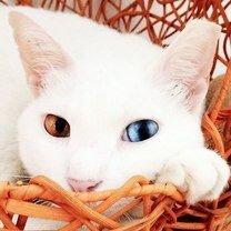 Кошки с красивой внешностью