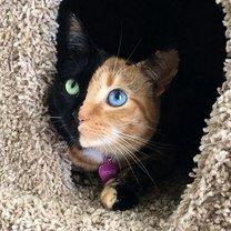 Кошки с красивой внешностью фото приколы