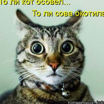 Фото приколы Чудаковатая котоматрица (47 фото)