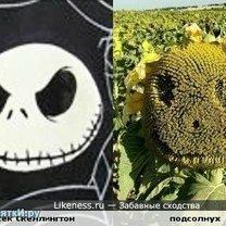 Забавные сходства фото
