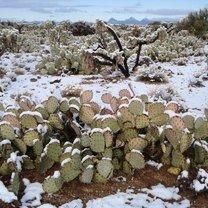 Фото приколы Действительно нежданная зима (19 фото)
