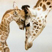 Фото приколы Красивые и трогательные звери (25 фото)