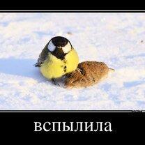 Смешно жить не запретишь! смешных фото приколов