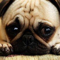 Стыдливые собачки и кошечки смешных фото приколов
