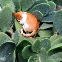 Сон в экстремальных условиях смешных фото приколов