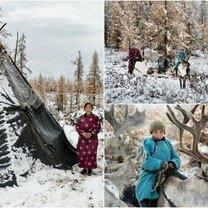Из жизни монгольских оленеводов фото