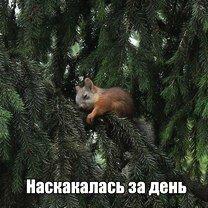 Фото приколы Предновогодние фотоприколы (50 фото)