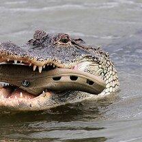 Фото приколы Курьёзы с животными - фото и гифки (24 фото)