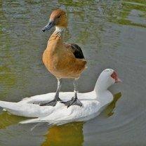 Красивые фото птиц смешных фото приколов
