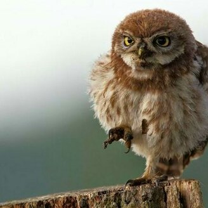 Фото приколы Красивые фото птиц (35 фото)