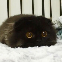 Фото приколы Милейшие котята (25 фото)