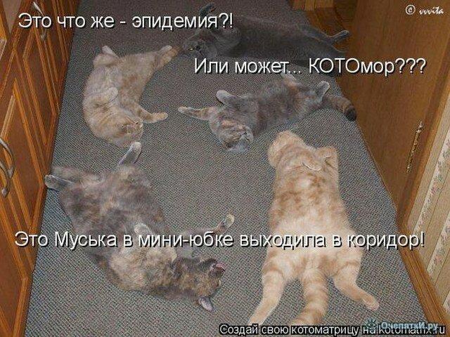 Зверьки из котоматрицы 34